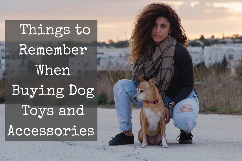 where to buy dog toys accessories